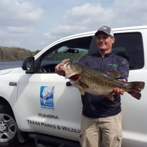 Another Texas BIG Bass – 13 lbs 1 oz Sharelunker