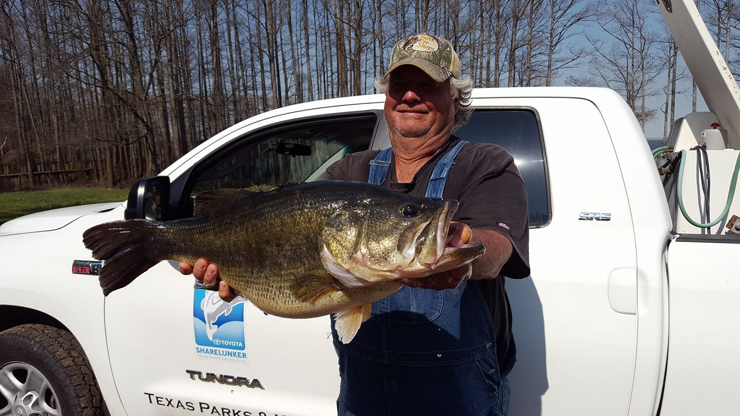 Lb monster bass caught at caddo lake texas for East texas fishing report
