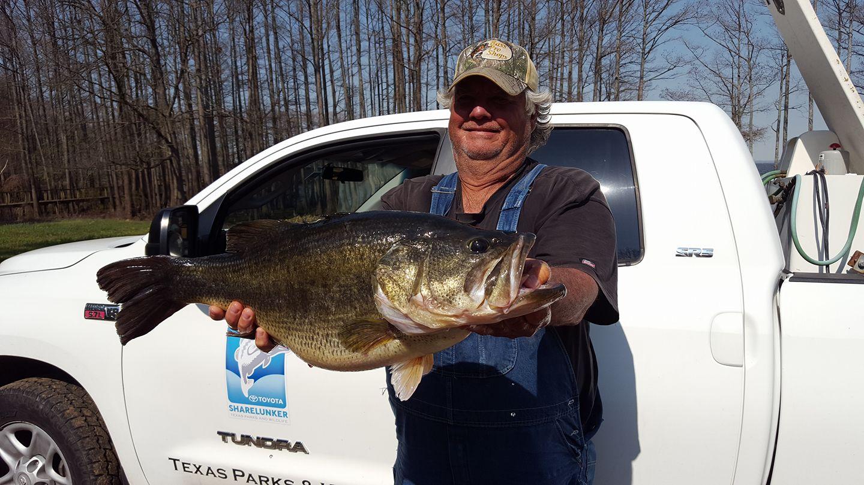 Lb monster bass caught at caddo lake texas for Caddo lake fishing report