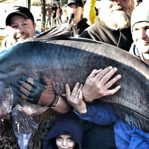 Here Kitty Kitty – 2nd Largest Blue Catfish Ever Caught