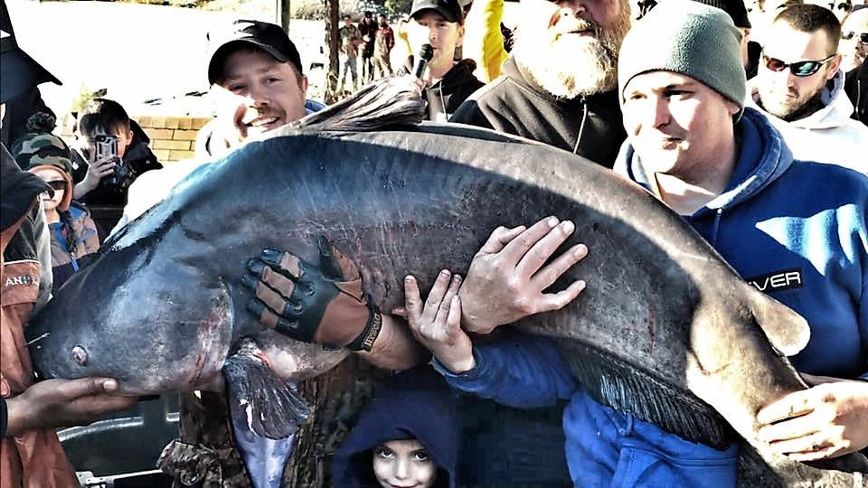 Here Kitty Kitty - 2nd Largest Blue Catfish Ever Caught ...